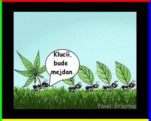 Mejdan