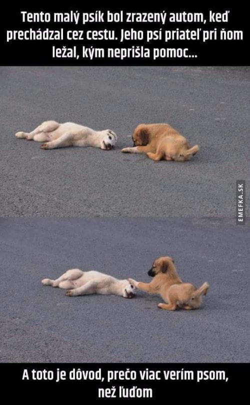 Psi drží pospolu..