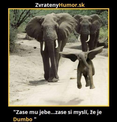Jsem Dumbo!!