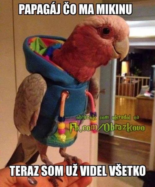 Papoušek v mikině