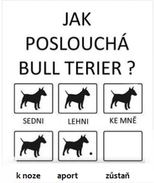 bull terier