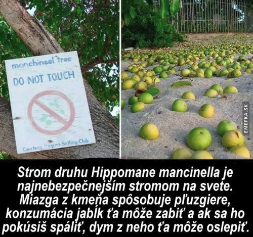 Nejnebezpečnější strom