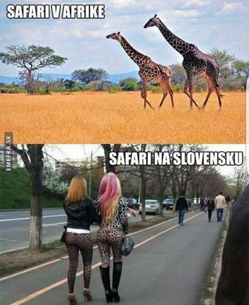 Safari :D