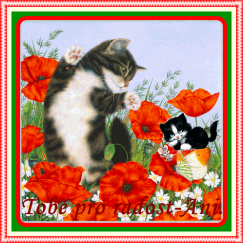 Kočičky