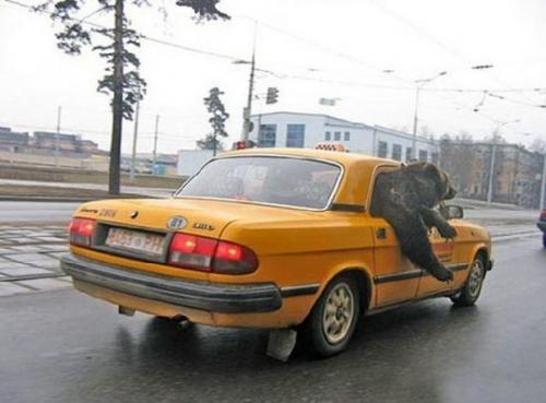 Taxi cirkus