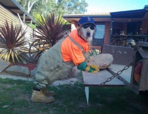 Psí dělník