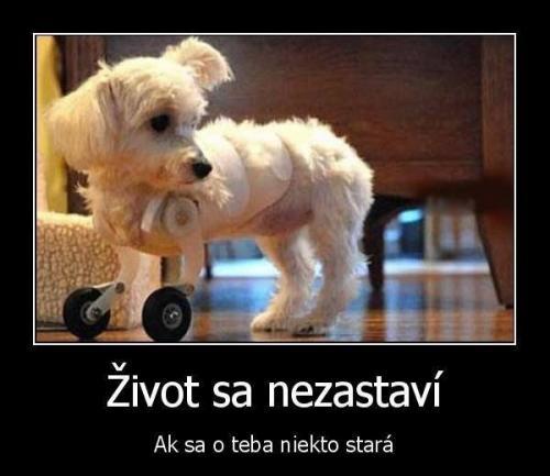 Pes bojovník :)