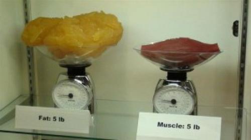 Pět liber tuku a pět liber svalů