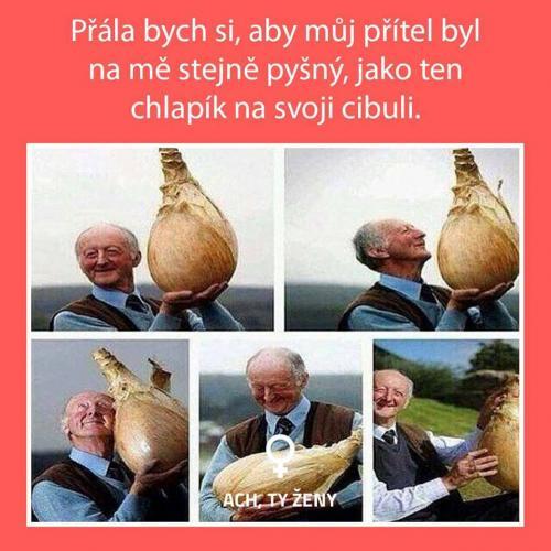 Cibule
