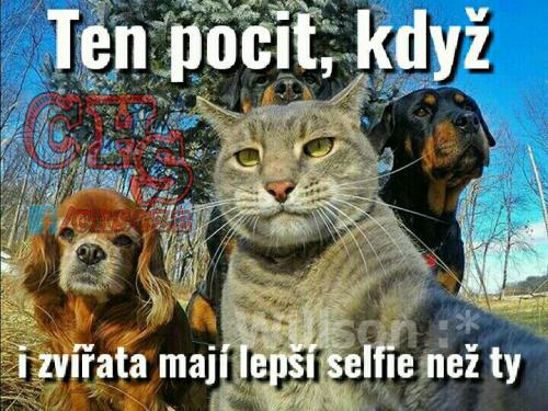 I zvířata