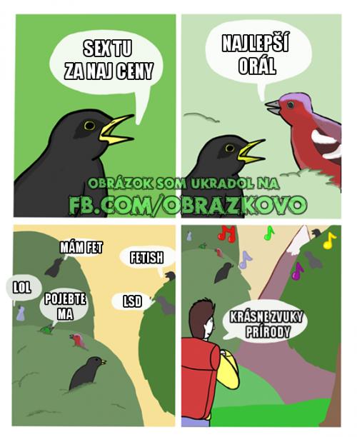 Zvuky přírody