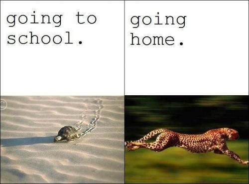 cesta do školy/ cesta ze školy