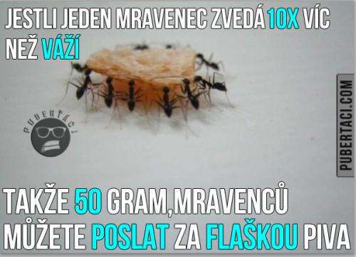 Mravenci jsou silní borci