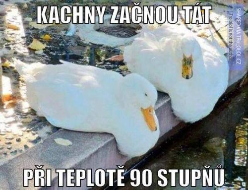 Kachny