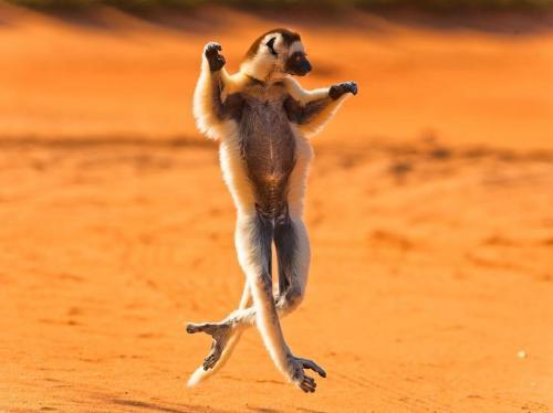 Jsem tanečník
