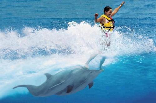 Delfíní surf