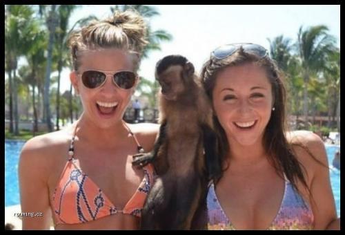 Chytrá opička