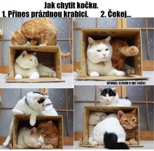 Jak chytit kočku