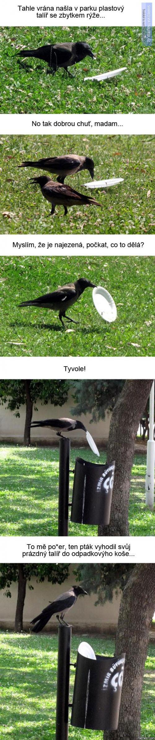 A pak že jsou ptáci blbí!