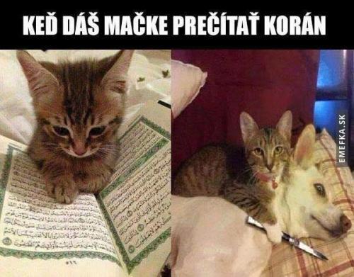 Když dáš kočce Korán
