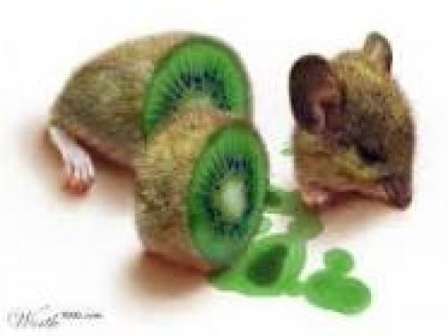 Kiwi myš