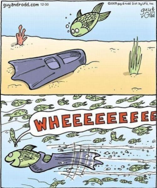Chytrá ryba