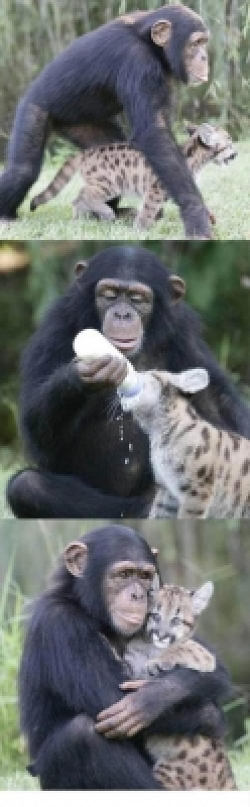 Zvířecí láska, taky láska