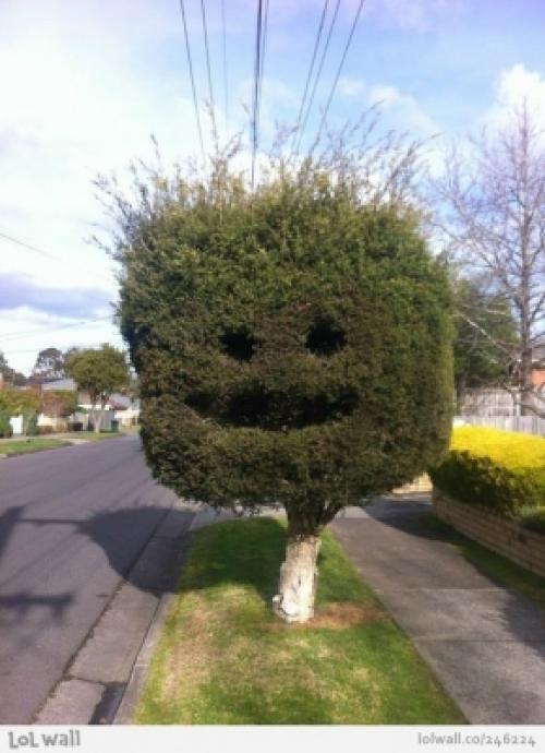 Bláznivá zeleň