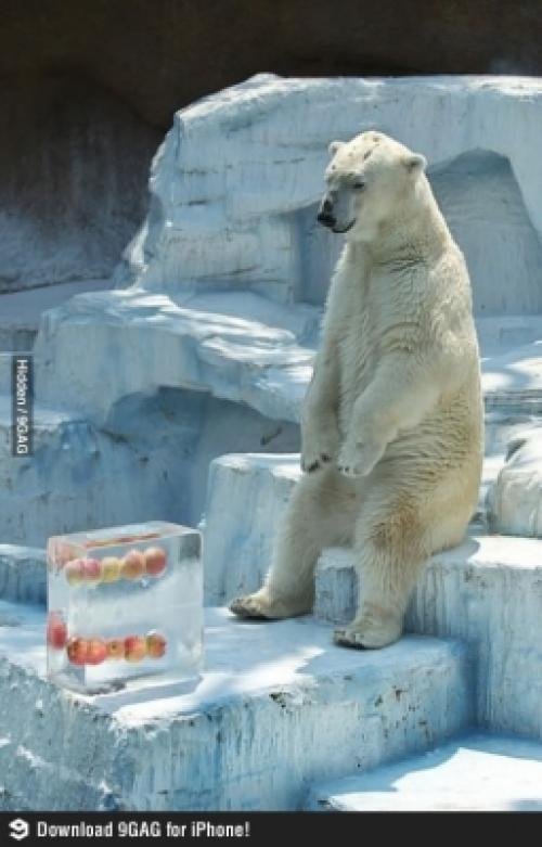 Pohodička na ledu