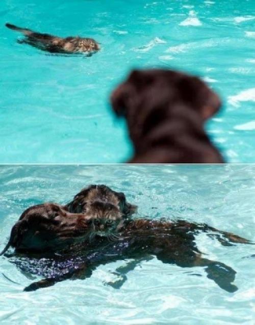 Pes zachránce