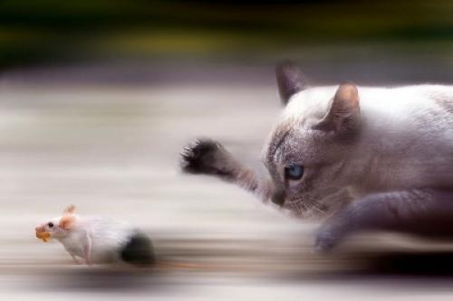 Velký speed