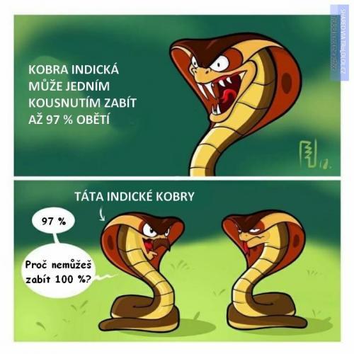 Indická kobra