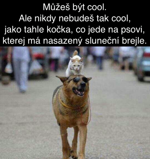 Být cool