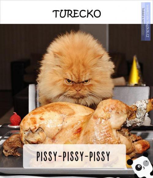 Takhle se volá na kočky v různých zemích světa