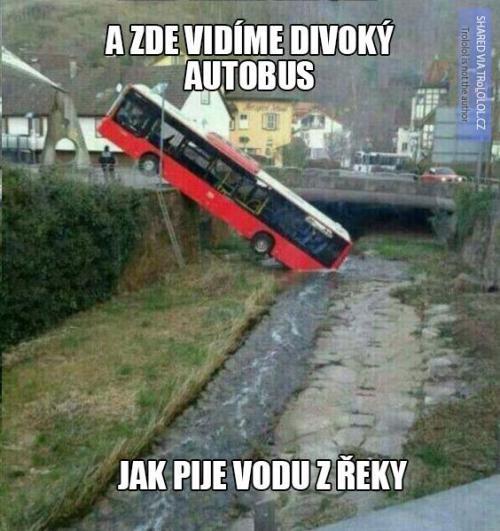 Divoký autobus přímo při činu!