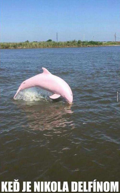 Nikola delfín