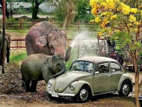 sloni automycka