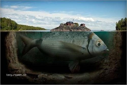 Erik Johannson fish