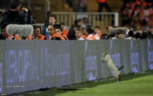 UEFA kocour