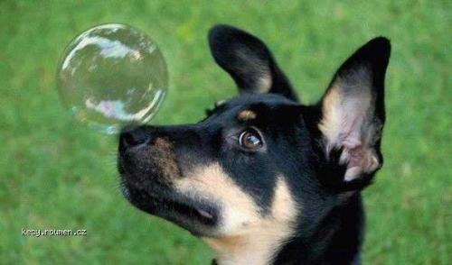 mydlova bublinka