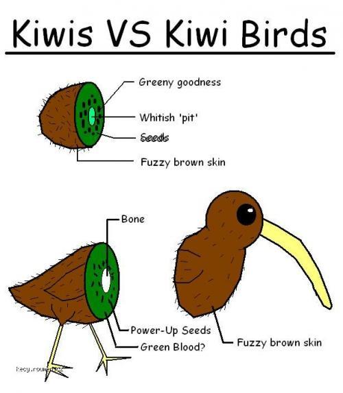 Kiwi VS Kiwi