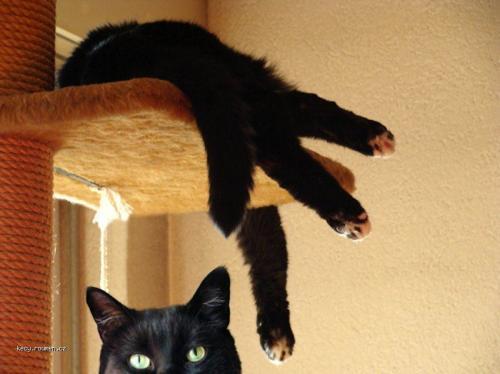 portal cat 1