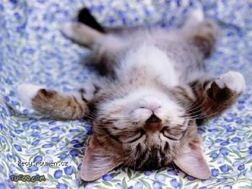 černá spící kočička fotky