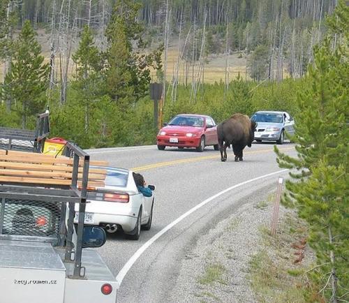 bizon brzdi dopravu