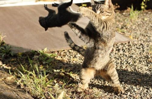The ancient art of Cat Fu
