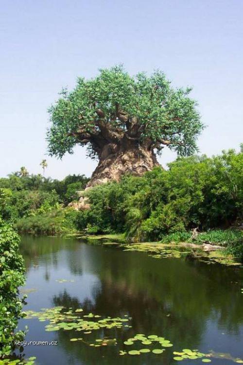 strom u vody