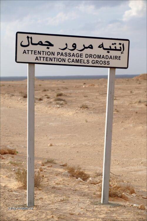 sign camels crossing gross