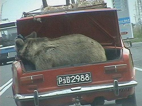 bulharsko misa medved