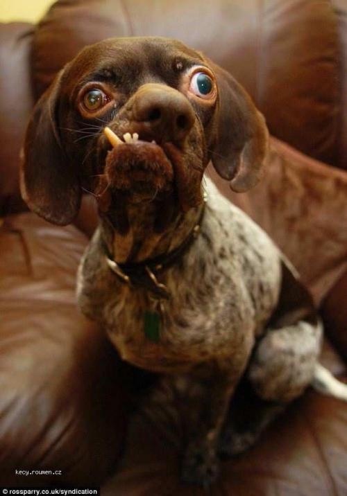 nejosklivejsi pes v Anglii