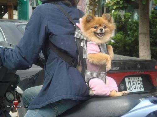 jak cestovat se psem6